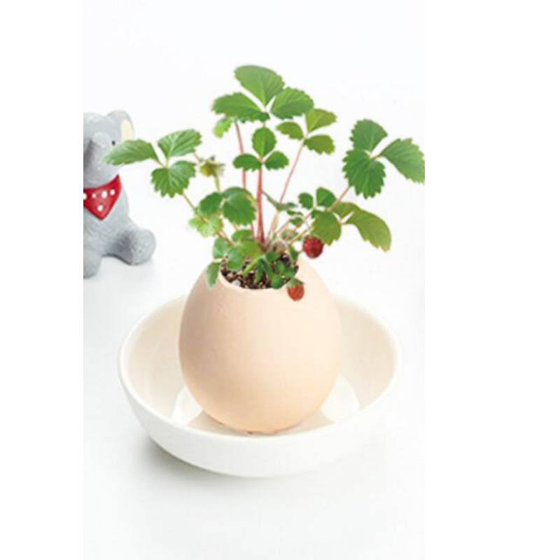 5CE5-1687442-Egg-Potted-Lucky-Egg-Decor-Indoor-Plants-Simple-Mini-Plant